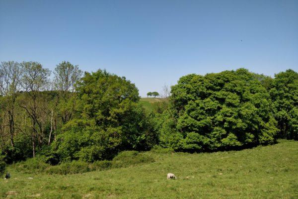 to træer Landbomuseet Kolding MOOS LANDSKABER
