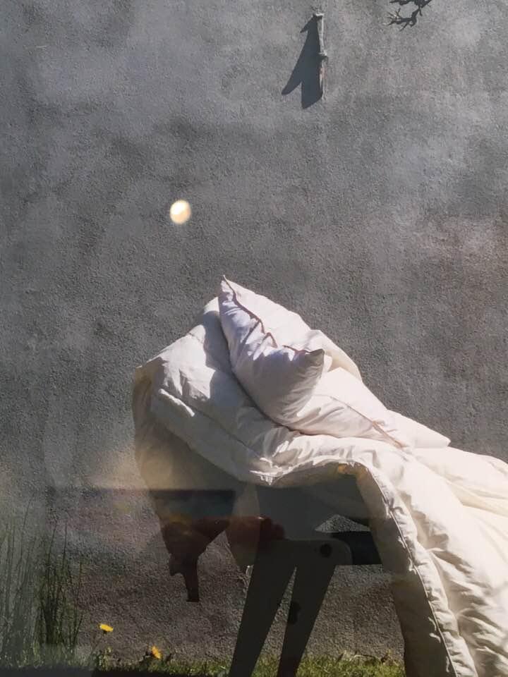 Artisk talk med SIgne Moos MOOS LANDSKABER