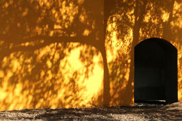 Berlin MOOS LANDSKABER træer og skygge orange husmur