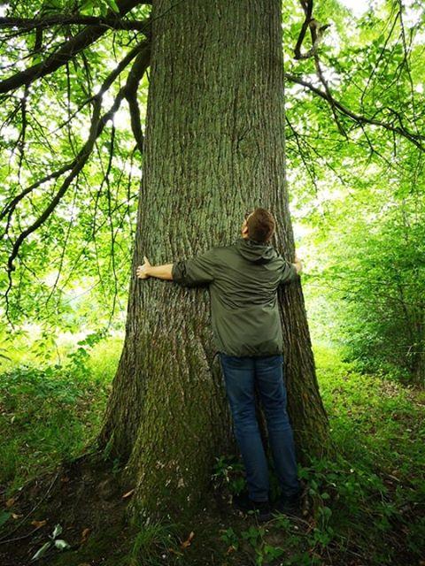 Kasper krammer træ